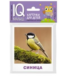 Карточки для детей птицы Айрис-Пресс 25983
